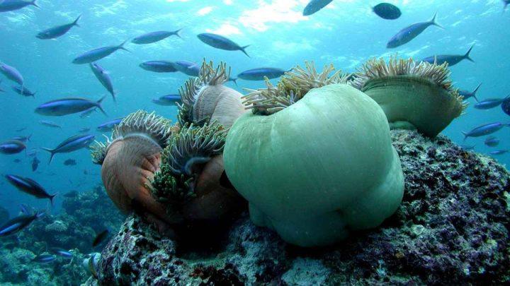 Maledivy Bandos Island Resort Spa